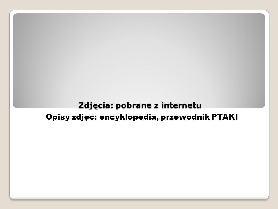Zdjęcia: pobrane z internetu Opisy zdjęć: encyklopedia, przewodnik PTAKI