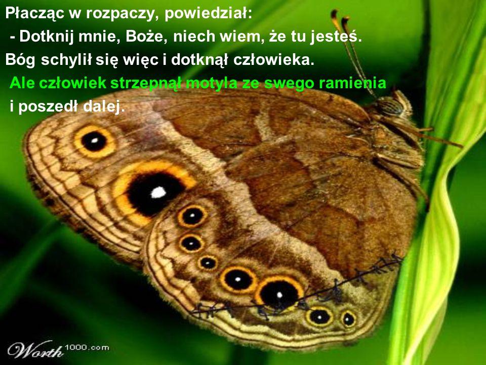 Płacząc w rozpaczy, powiedział: - Dotknij mnie, Boże, niech wiem, że tu jesteś. Bóg schylił się więc i dotknął człowieka. Ale człowiek strzepnął motyl