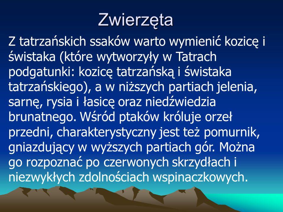 Zwierzęta Z tatrzańskich ssaków warto wymienić kozicę i świstaka (które wytworzyły w Tatrach podgatunki: kozicę tatrzańską i świstaka tatrzańskiego), a w niższych partiach jelenia, sarnę, rysia i łasicę oraz niedźwiedzia brunatnego.