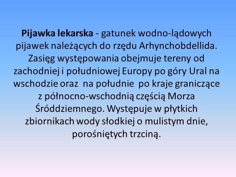 Pijawka lekarska - gatunek wodno-lądowych pijawek należących do rzędu Arhynchobdellida. Zasięg występowania obejmuje tereny od zachodniej i południowe