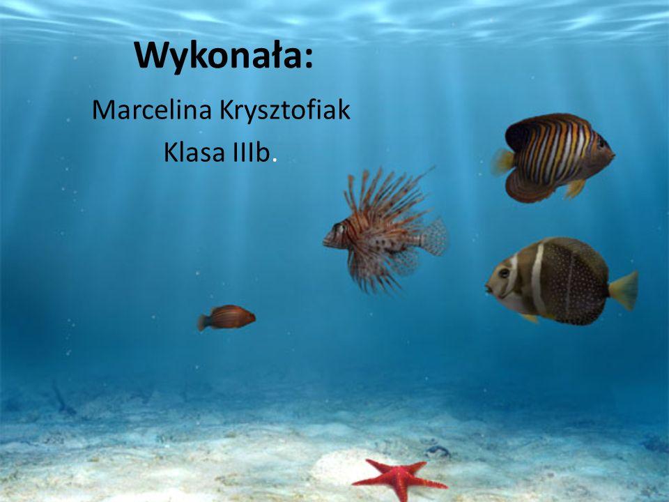 Wykonała: Marcelina Krysztofiak Klasa IIIb.