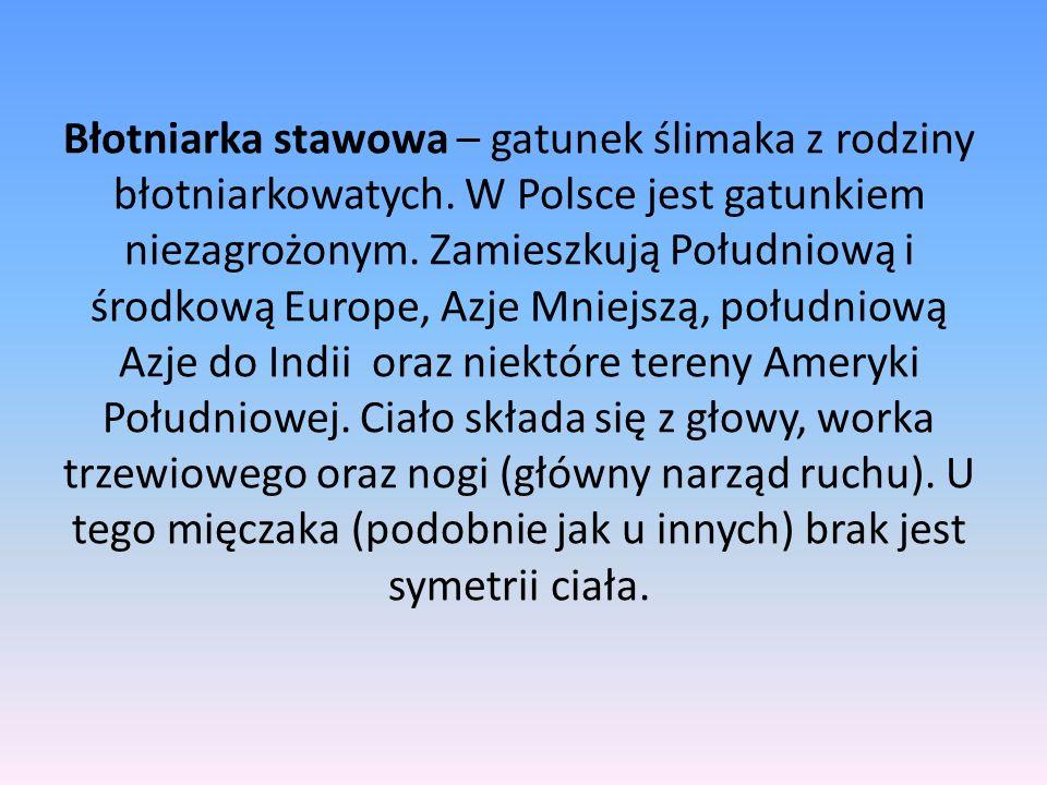 Błotniarka stawowa – gatunek ślimaka z rodziny błotniarkowatych. W Polsce jest gatunkiem niezagrożonym. Zamieszkują Południową i środkową Europe, Azje