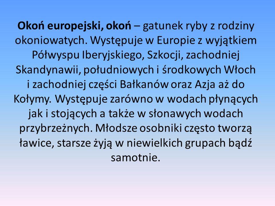 Okoń europejski, okoń – gatunek ryby z rodziny okoniowatych. Występuje w Europie z wyjątkiem Półwyspu Iberyjskiego, Szkocji, zachodniej Skandynawii, p