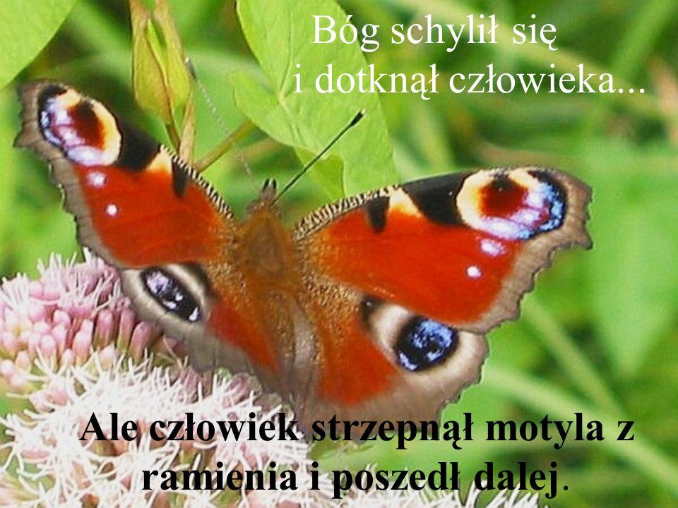 Bóg schylił się i dotknął człowieka... Ale człowiek strzepnął motyla z ramienia i poszedł dalej.
