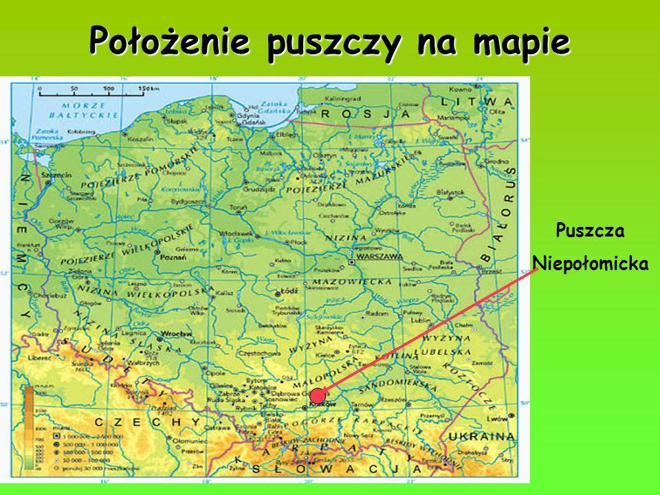 Puszcza Niepołomicka Położenie puszczy na mapie