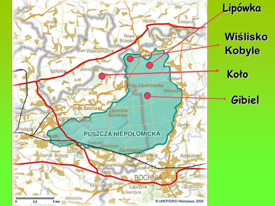 Gibiel Rezerwat leśny utworzony w 1961 r.na powierzchni 29,89 ha.