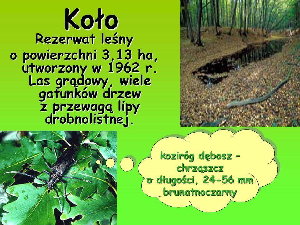 Koło Rezerwat leśny o powierzchni 3,13 ha, utworzony w 1962 r. Las grądowy, wiele gatunków drzew z przewagą lipy drobnolistnej. koziróg dębosz – chrzą
