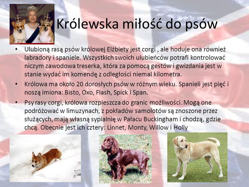 Królewska miłość do psów Ulubioną rasą psów królowej Elżbiety jest corgi, ale hoduje ona również labradory i spaniele. Wszystkich swoich ulubieńców po