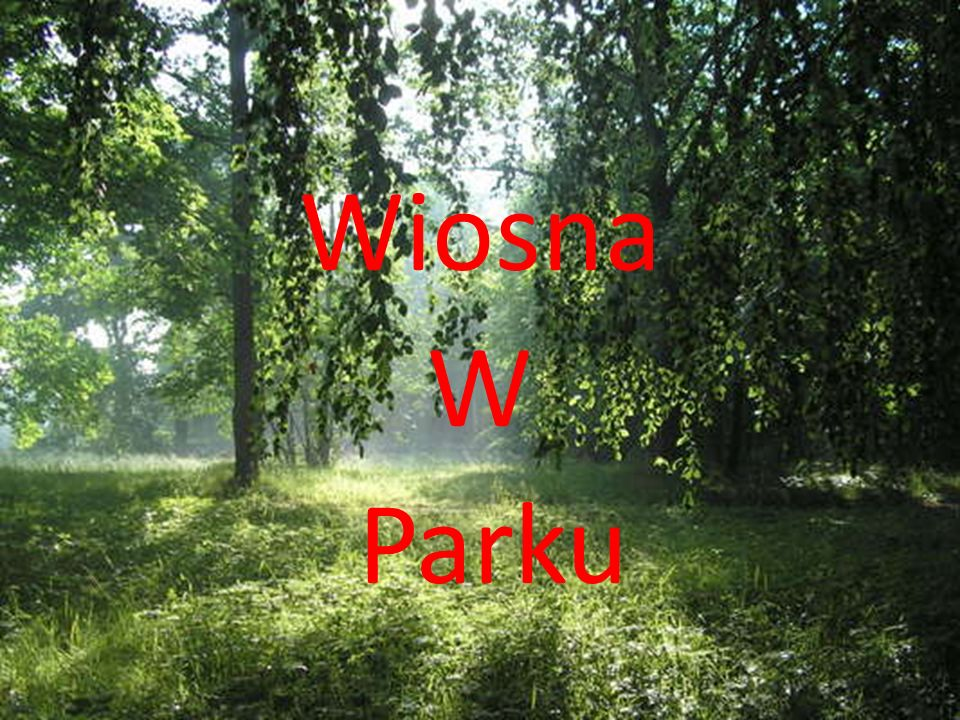 Kiedy wiosna przychodzi do parku na drzewach pojawiają się pierwsze pąki,a na glebie pierwsze kwiaty.