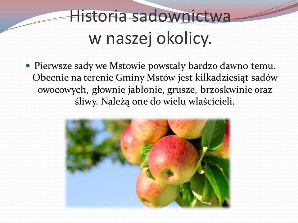 Historia sadownictwa w naszej okolicy. Pierwsze sady we Mstowie powstały bardzo dawno temu. Obecnie na terenie Gminy Mstów jest kilkadziesiąt sadów ow