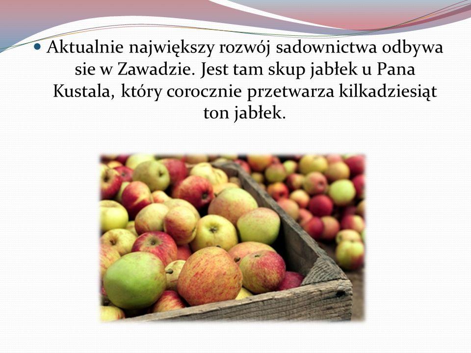 Aktualnie największy rozwój sadownictwa odbywa sie w Zawadzie. Jest tam skup jabłek u Pana Kustala, który corocznie przetwarza kilkadziesiąt ton jabłe