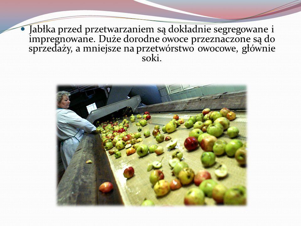 Jabłka przed przetwarzaniem są dokładnie segregowane i impregnowane. Duże dorodne owoce przeznaczone są do sprzedaży, a mniejsze na przetwórstwo owoco