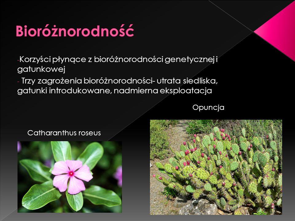 - Korzyści płynące z bioróżnorodności genetycznej i gatunkowej - Trzy zagrożenia bioróżnorodności- utrata siedliska, gatunki introdukowane, nadmierna