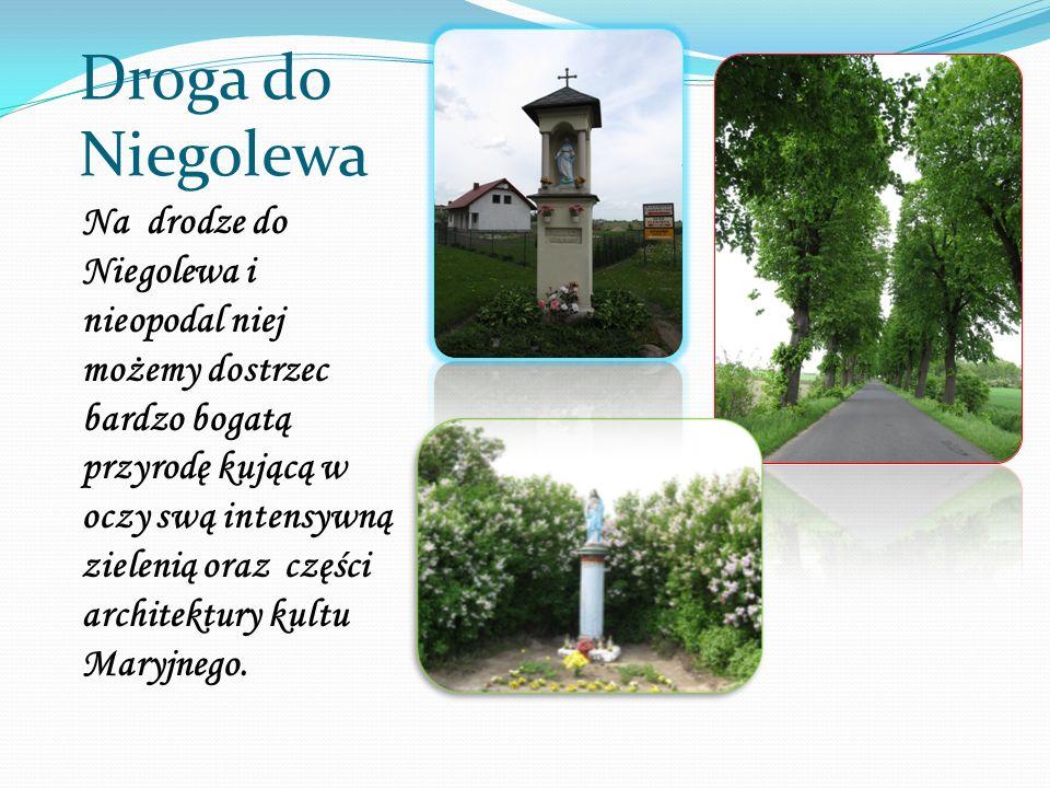 Droga do Niegolewa Na drodze do Niegolewa i nieopodal niej możemy dostrzec bardzo bogatą przyrodę kującą w oczy swą intensywną zielenią oraz części ar