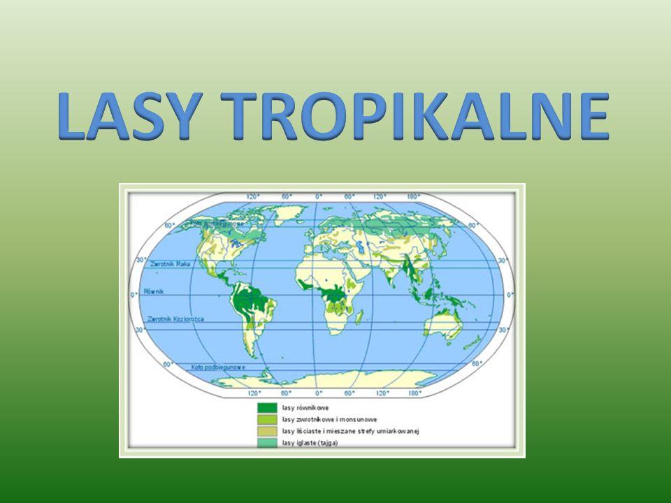 Czy warto chronić lasy tropikalne? Przekonajcie się sami !!!