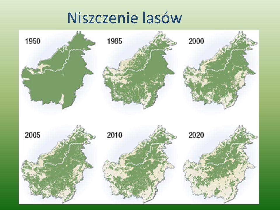 Niszczenie lasów