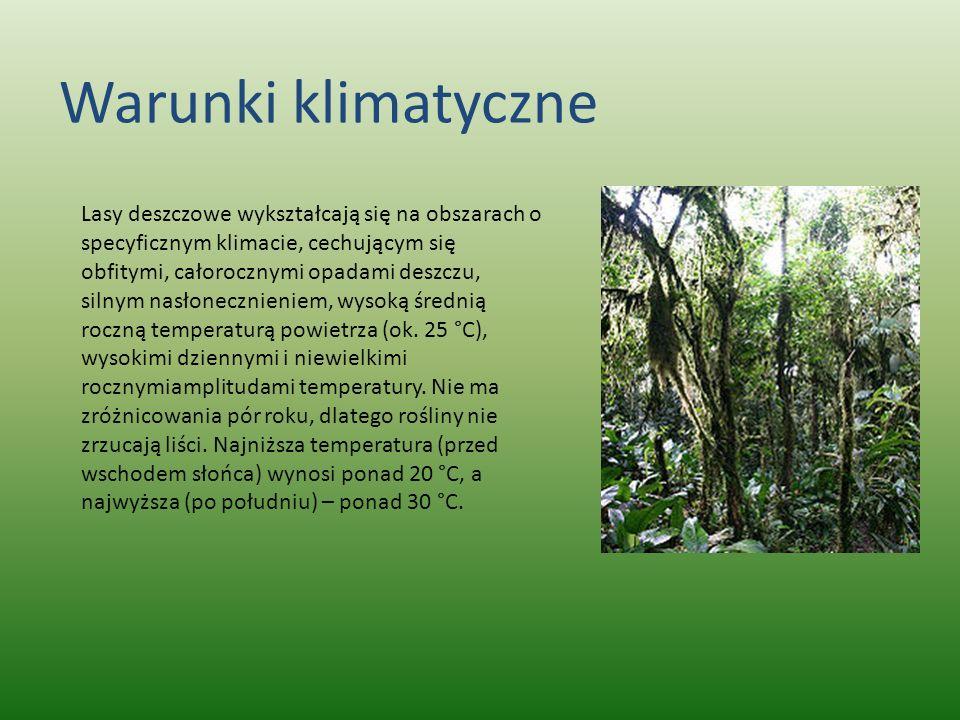 Warunki klimatyczne Lasy deszczowe wykształcają się na obszarach o specyficznym klimacie, cechującym się obfitymi, całorocznymi opadami deszczu, silny