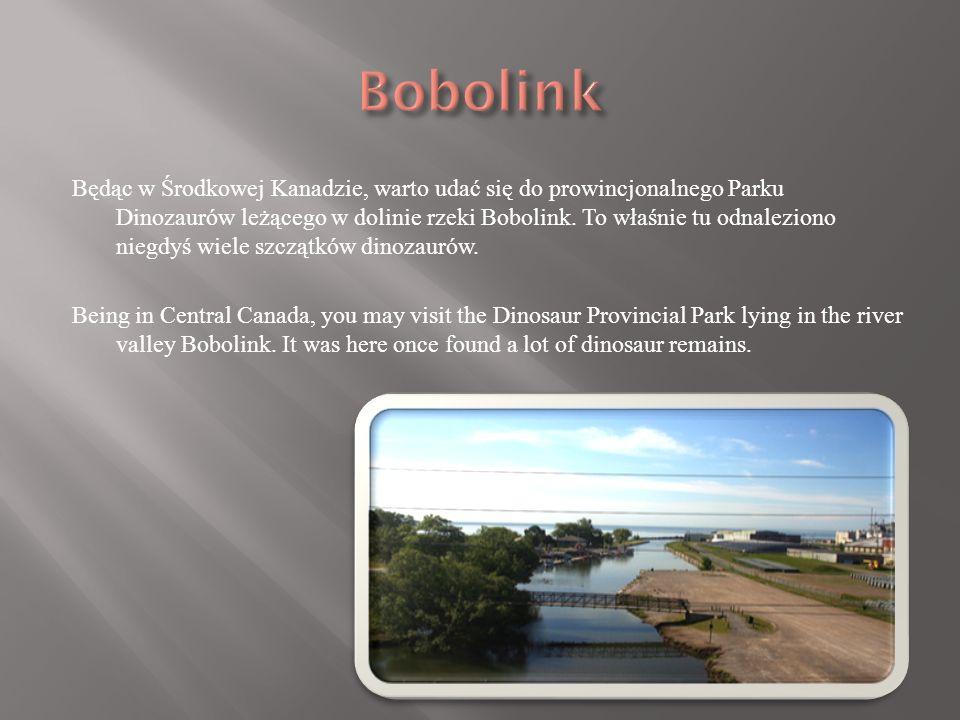 Będąc w Środkowej Kanadzie, warto udać się do prowincjonalnego Parku Dinozaurów leżącego w dolinie rzeki Bobolink.