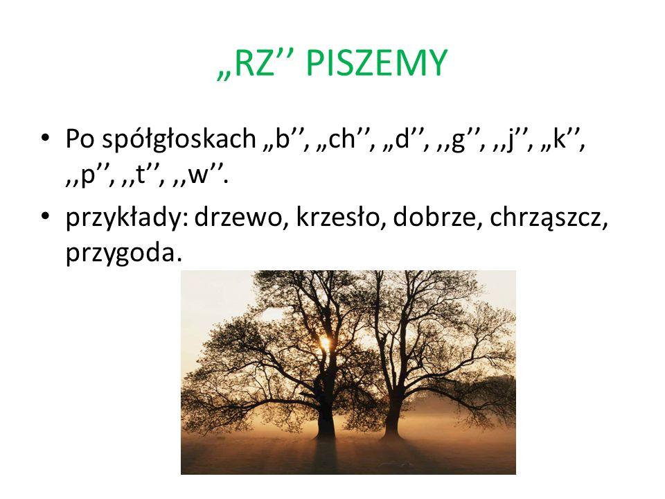RZ PISZEMY Po spółgłoskach b, ch, d,,,g,,,j, k,,,p,,,t,,,w. przykłady: drzewo, krzesło, dobrze, chrząszcz, przygoda.