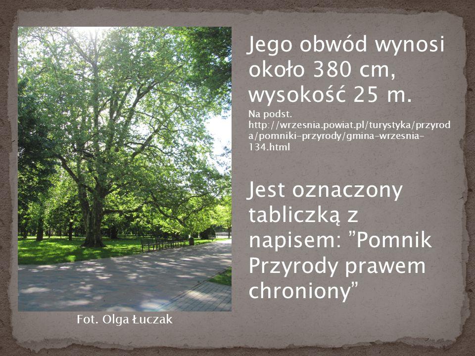 Jego obwód wynosi około 380 cm, wysokość 25 m. Na podst.