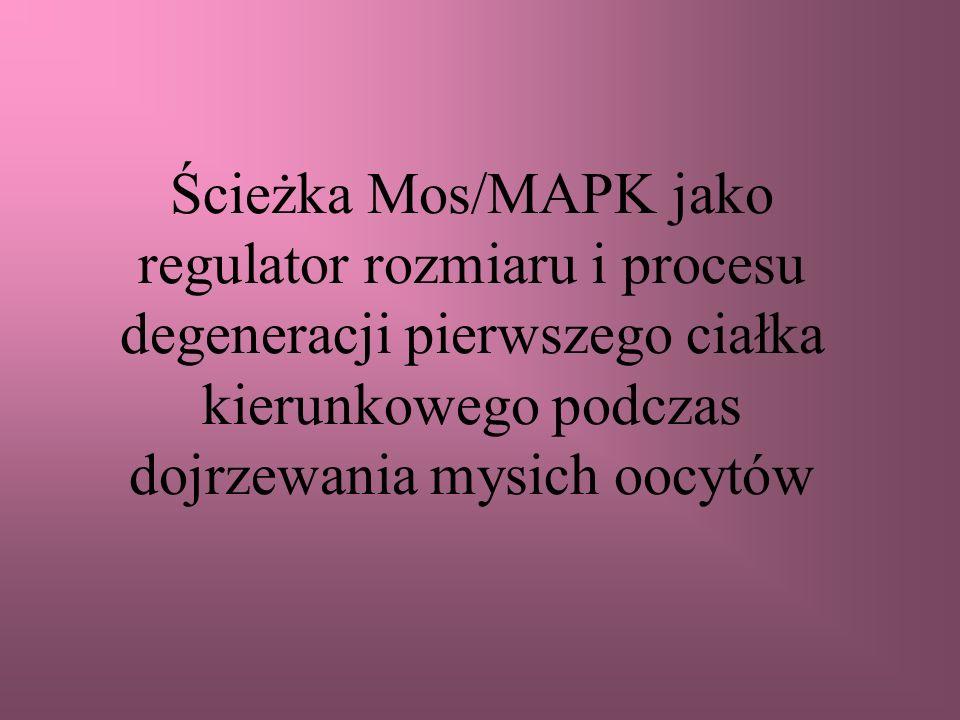 Ścieżka Mos/MAPK jako regulator rozmiaru i procesu degeneracji pierwszego ciałka kierunkowego podczas dojrzewania mysich oocytów