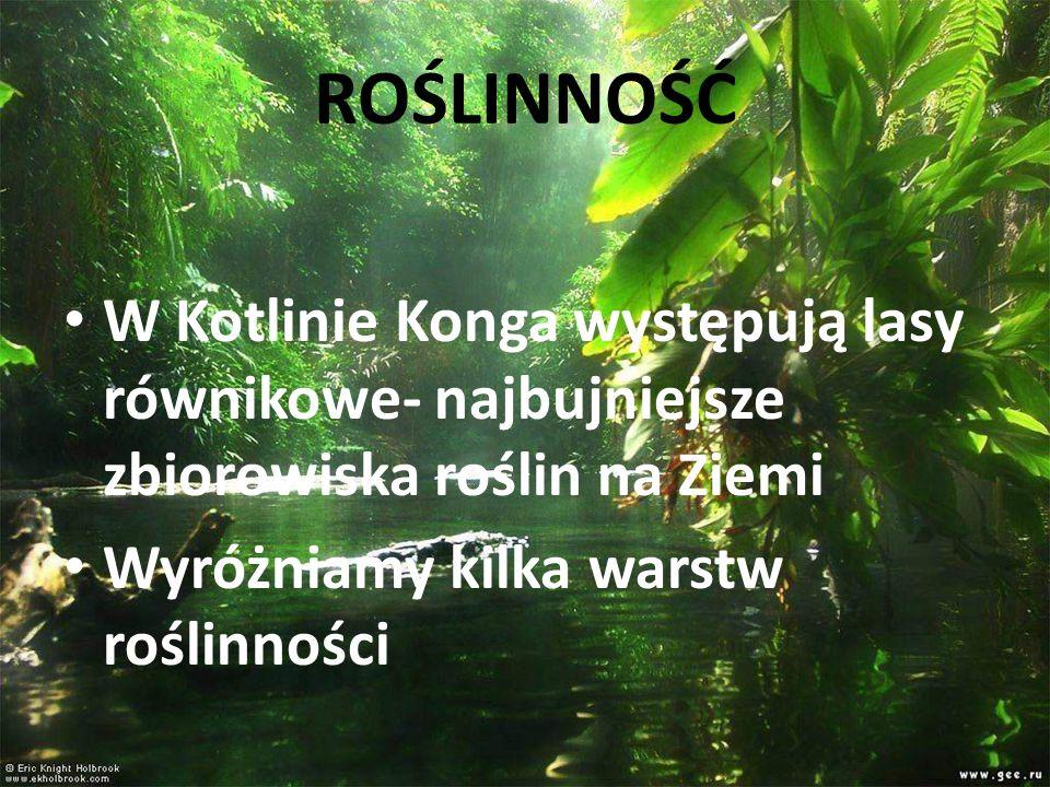 ROŚLINNOŚĆ W Kotlinie Konga występują lasy równikowe- najbujniejsze zbiorowiska roślin na Ziemi Wyróżniamy kilka warstw roślinności