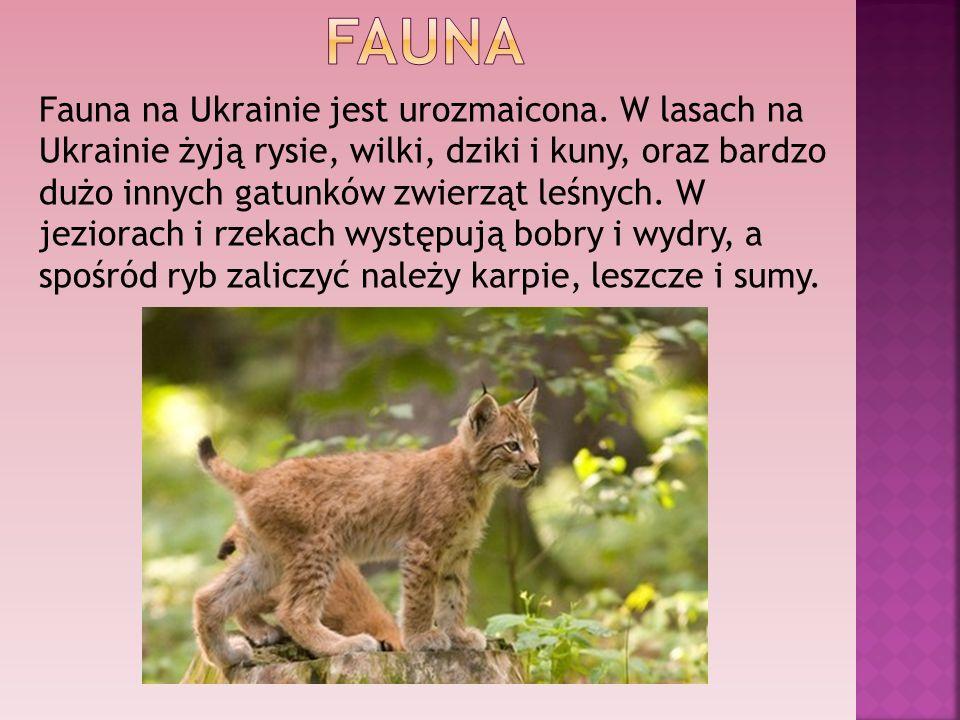 Fauna na Ukrainie jest urozmaicona. W lasach na Ukrainie żyją rysie, wilki, dziki i kuny, oraz bardzo dużo innych gatunków zwierząt leśnych. W jeziora