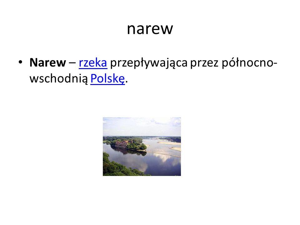 narew Narew – rzeka przepływająca przez północno- wschodnią Polskę.rzekaPolskę