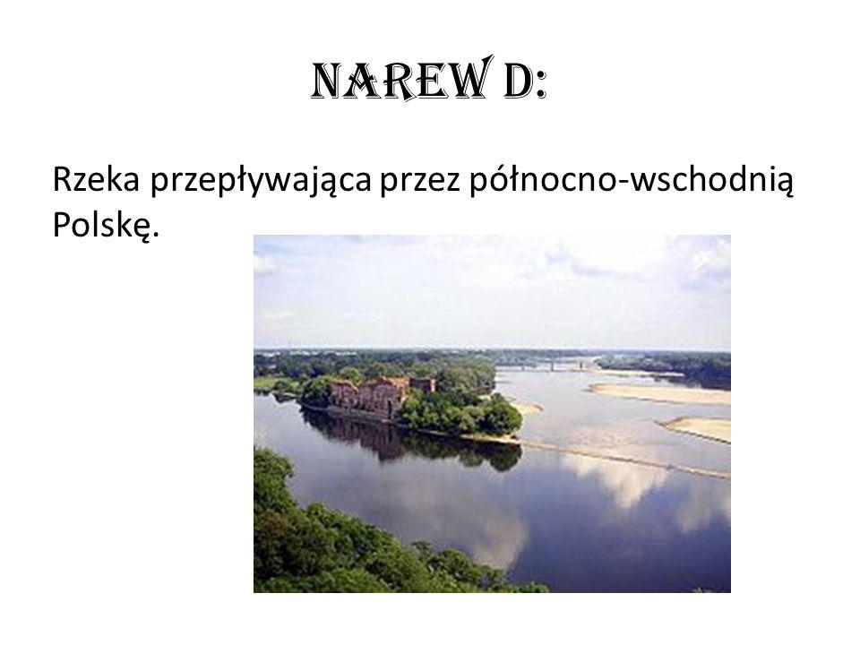 Narew D: Rzeka przepływająca przez północno-wschodnią Polskę.