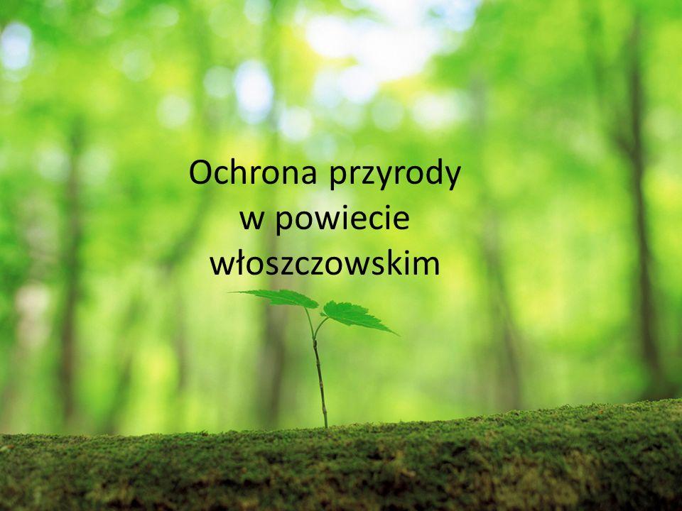 Ochrona przyrody w powiecie włoszczowskim