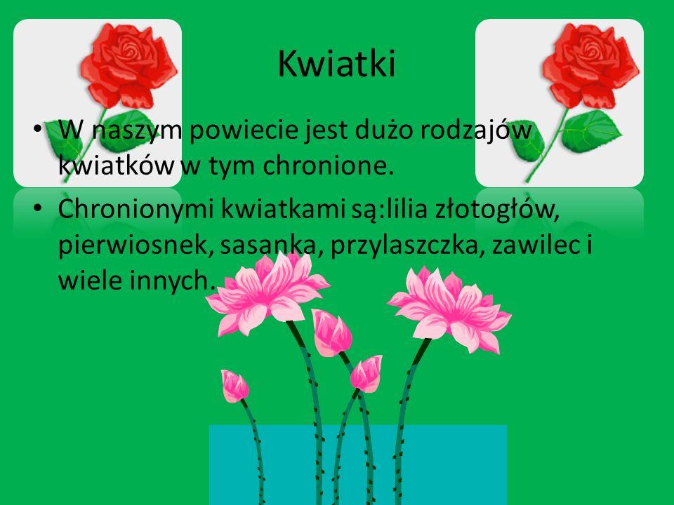 Kwiatki W naszym powiecie jest dużo rodzajów kwiatków w tym chronione. Chronionymi kwiatkami są:lilia złotogłów, pierwiosnek, sasanka, przylaszczka, z