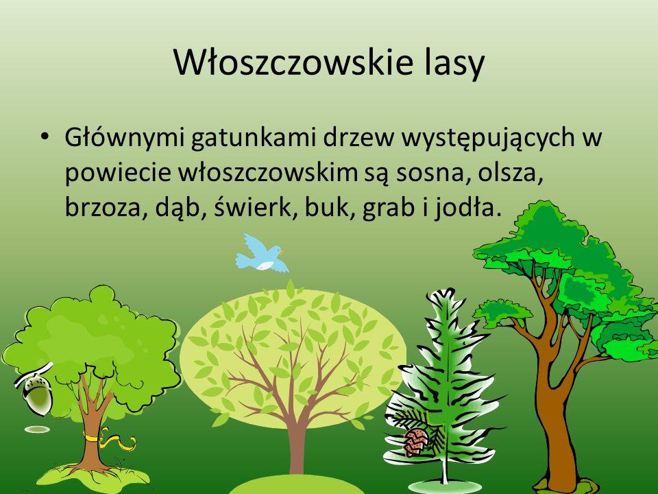 Włoszczowskie lasy Głównymi gatunkami drzew występujących w powiecie włoszczowskim są sosna, olsza, brzoza, dąb, świerk, buk, grab i jodła.