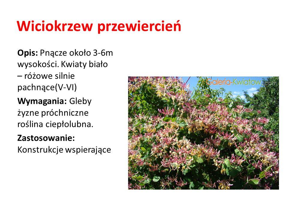 Wiciokrzew przewiercień Opis: Pnącze około 3-6m wysokości. Kwiaty biało – różowe silnie pachnące(V-VI) Wymagania: Gleby żyzne próchniczne roślina ciep