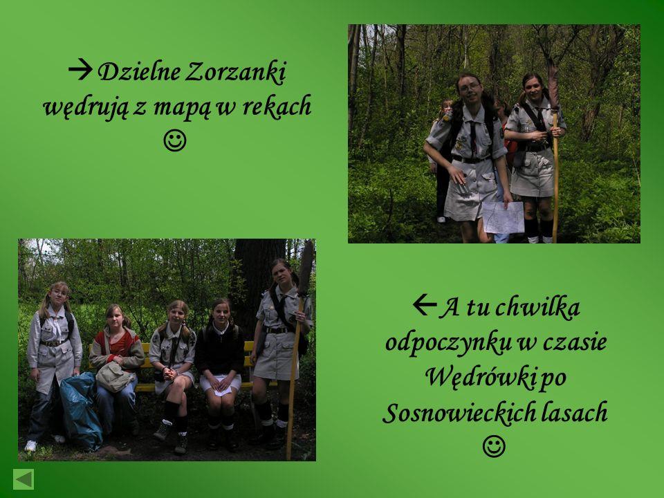 Dzielne Zorzanki wędrują z mapą w rekach A tu chwilka odpoczynku w czasie Wędrówki po Sosnowieckich lasach
