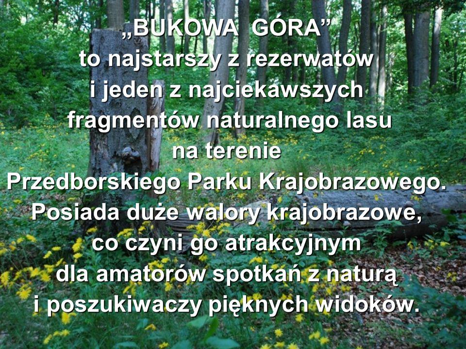 BUKOWA GÓRA to najstarszy z rezerwatów i jeden z najciekawszych fragmentów naturalnego lasu fragmentów naturalnego lasu na terenie Przedborskiego Park
