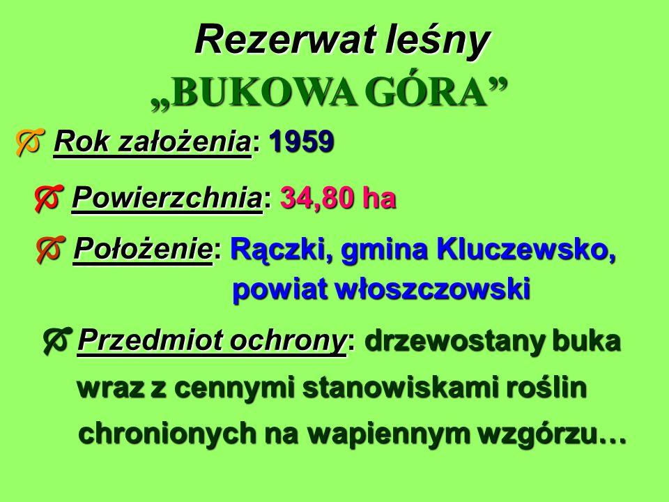 Rezerwat leśny Rok założenia: 1959 Rok założenia: 1959 BUKOWA GÓRA Powierzchnia: 34,80 ha Powierzchnia: 34,80 ha Położenie: Rączki, gmina Kluczewsko,