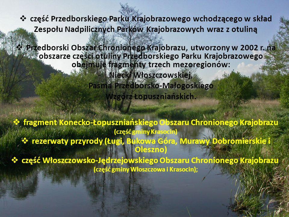 część Przedborskiego Parku Krajobrazowego wchodzącego w skład Zespołu Nadpilicznych Parków Krajobrazowych wraz z otuliną Przedborski Obszar Chronionego Krajobrazu, utworzony w 2002 r.