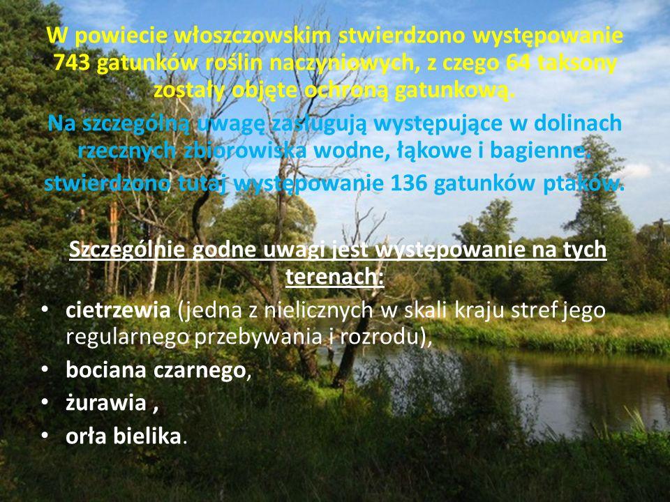 W powiecie włoszczowskim stwierdzono występowanie 743 gatunków roślin naczyniowych, z czego 64 taksony zostały objęte ochroną gatunkową.