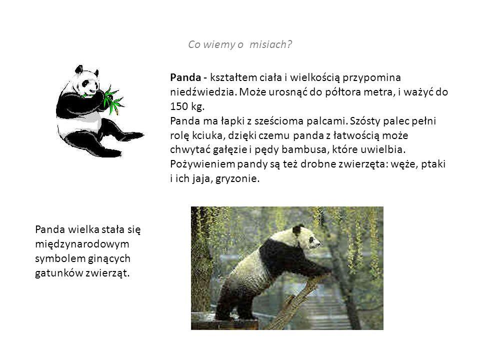 Co wiemy o misiach.Panda - kształtem ciała i wielkością przypomina niedźwiedzia.