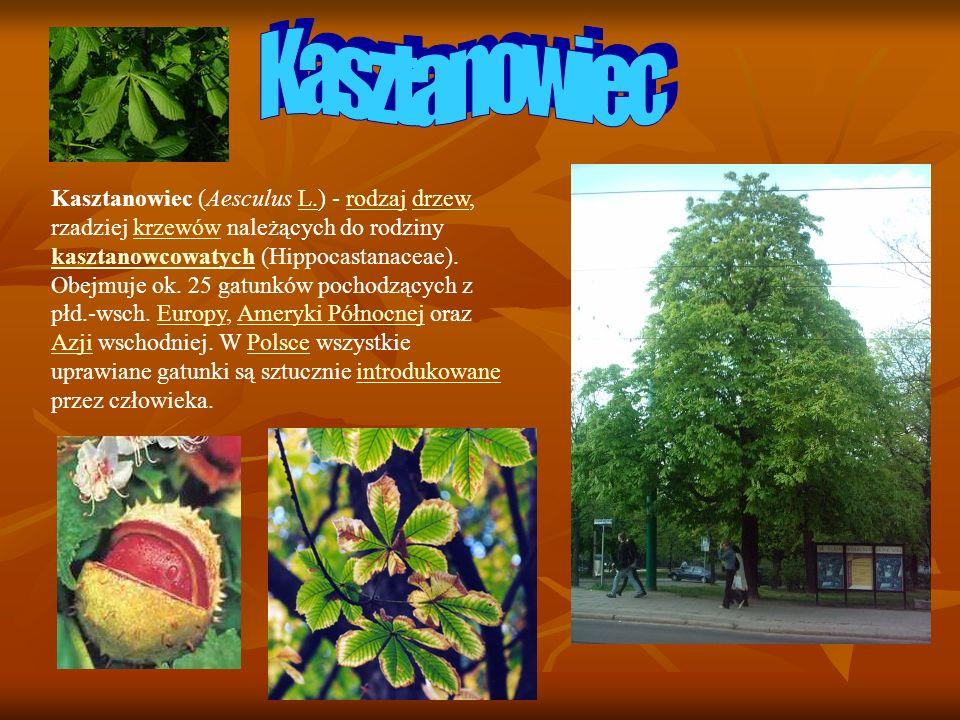 Kasztanowiec (Aesculus L.) - rodzaj drzew, rzadziej krzewów należących do rodziny kasztanowcowatych (Hippocastanaceae). Obejmuje ok. 25 gatunków pocho