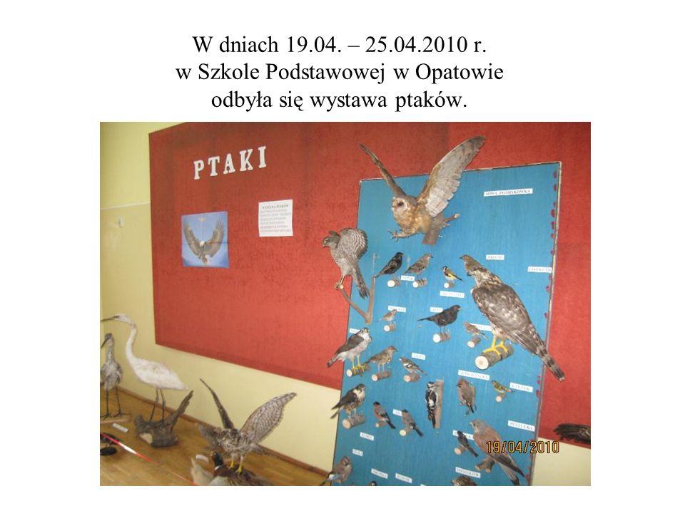 W dniach 19.04. – 25.04.2010 r. w Szkole Podstawowej w Opatowie odbyła się wystawa ptaków.