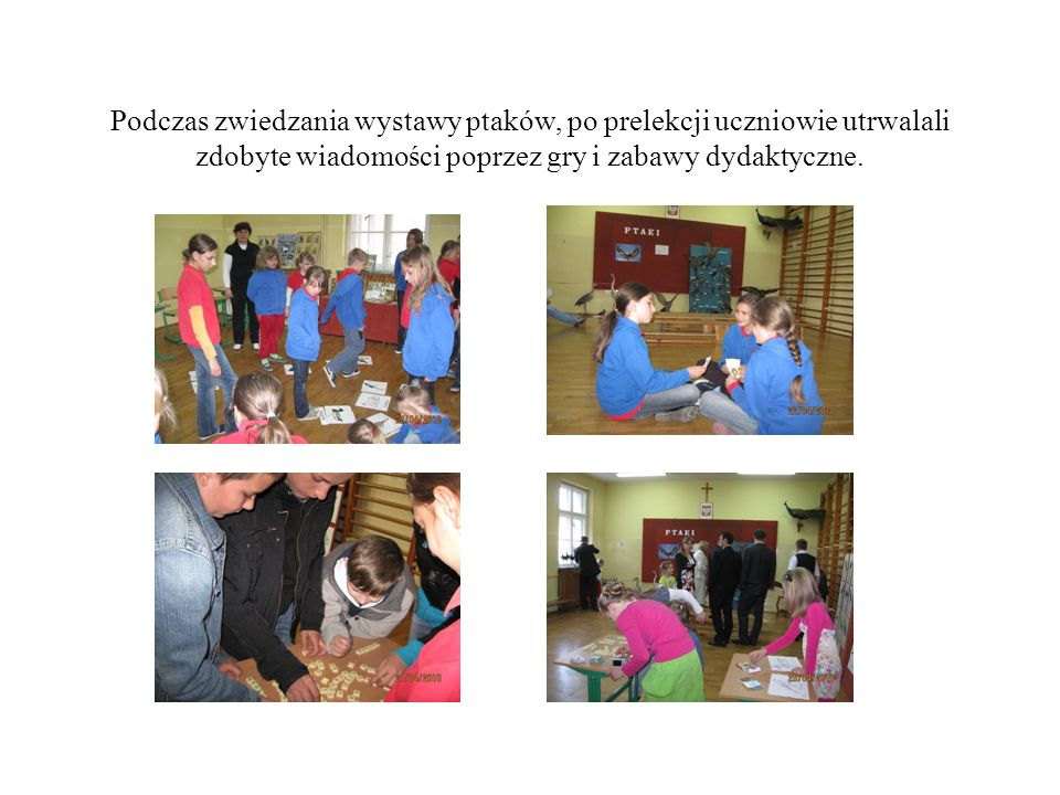 Podczas zwiedzania wystawy ptaków, po prelekcji uczniowie utrwalali zdobyte wiadomości poprzez gry i zabawy dydaktyczne.