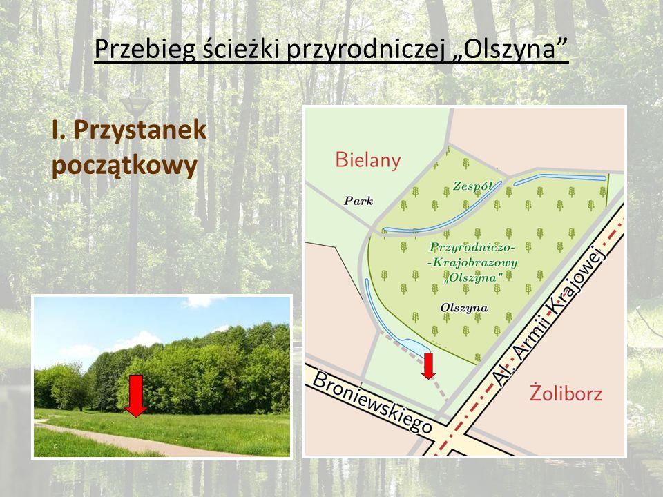 Przebieg ścieżki przyrodniczej Olszyna I. Przystanek początkowy
