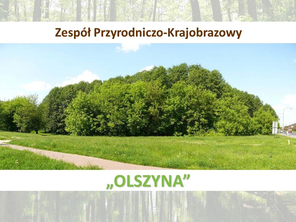 Zespół Przyrodniczo-Krajobrazowy OLSZYNA