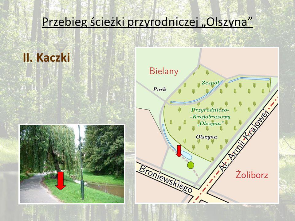 Przebieg ścieżki przyrodniczej Olszyna II. Kaczki