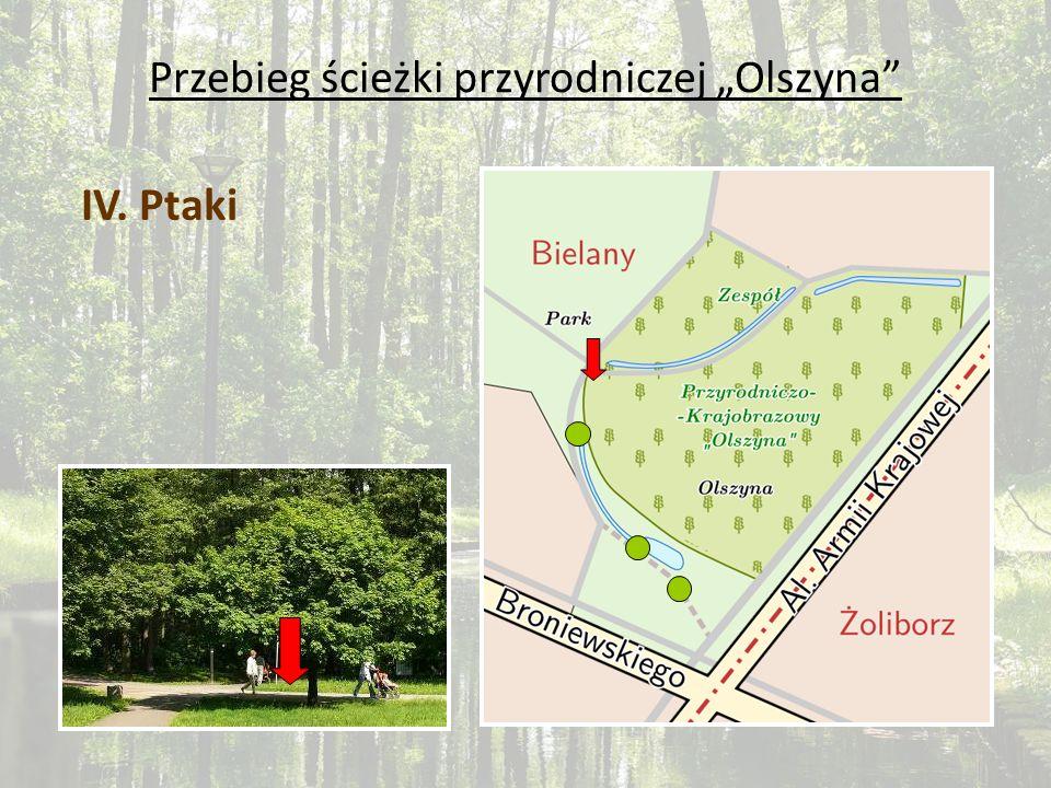 Przebieg ścieżki przyrodniczej Olszyna IV. Ptaki