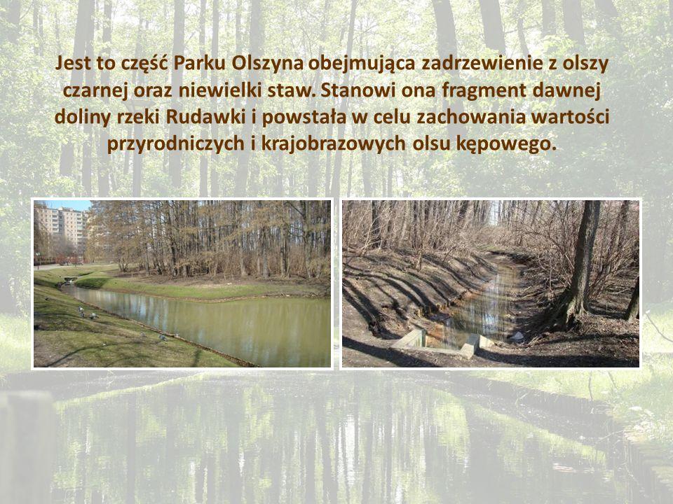 Jest to część Parku Olszyna obejmująca zadrzewienie z olszy czarnej oraz niewielki staw. Stanowi ona fragment dawnej doliny rzeki Rudawki i powstała w