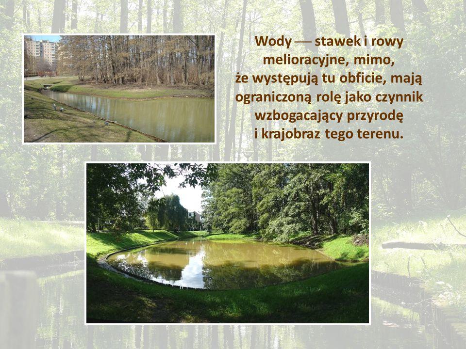 Wody stawek i rowy melioracyjne, mimo, że występują tu obficie, mają ograniczoną rolę jako czynnik wzbogacający przyrodę i krajobraz tego terenu.