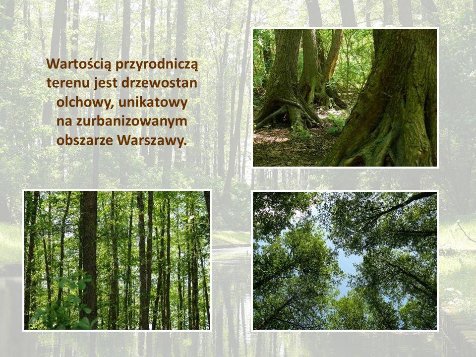 Wartością przyrodniczą terenu jest drzewostan olchowy, unikatowy na zurbanizowanym obszarze Warszawy.