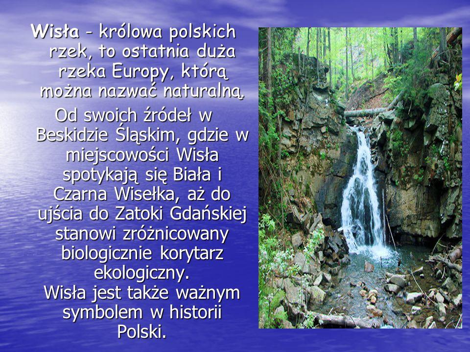 Wisła - królowa polskich rzek, to ostatnia duża rzeka Europy, którą można nazwać naturalną. Od swoich źródeł w Beskidzie Śląskim, gdzie w miejscowości